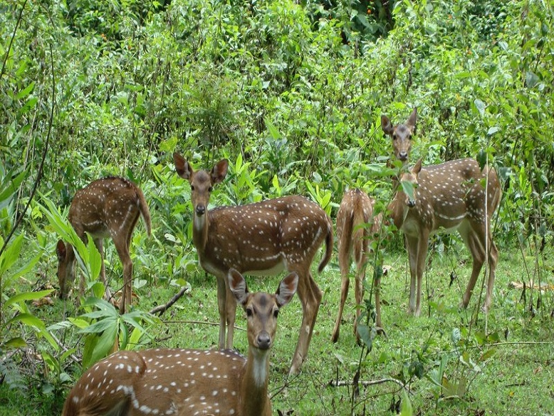 Sagareshwar Wildlife Sanctuary
